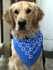 Large Pet Bandana (Pack of 10) image 2